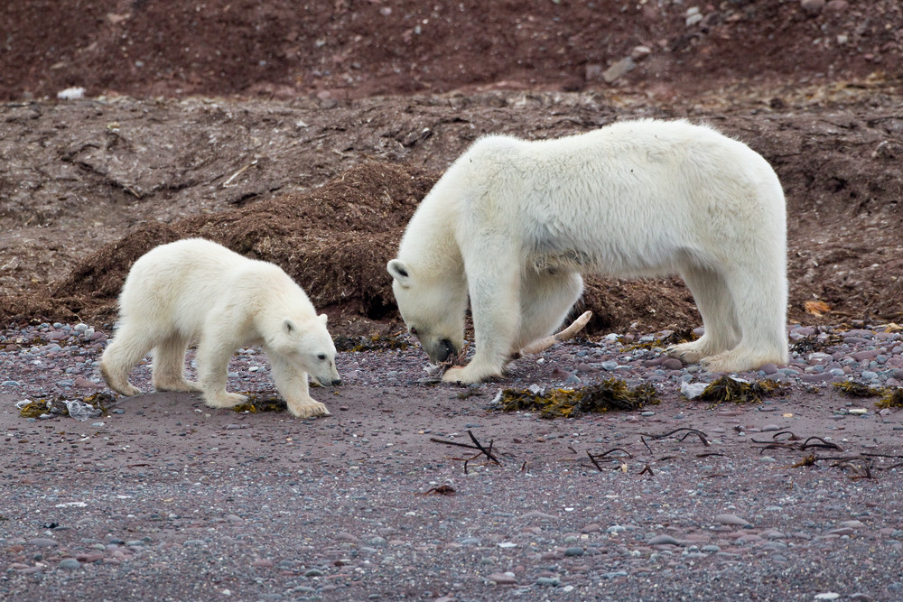 05 Polar Bear.jpg