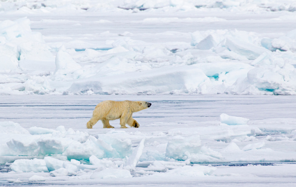 07 Polar Bear.jpg