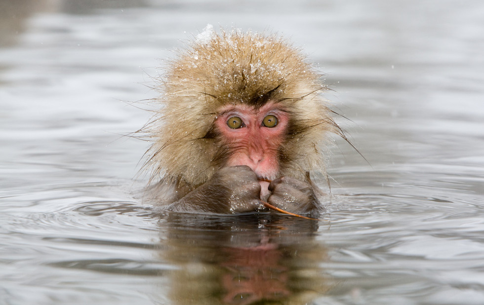 _93C9751 Young monkey in pool with stick