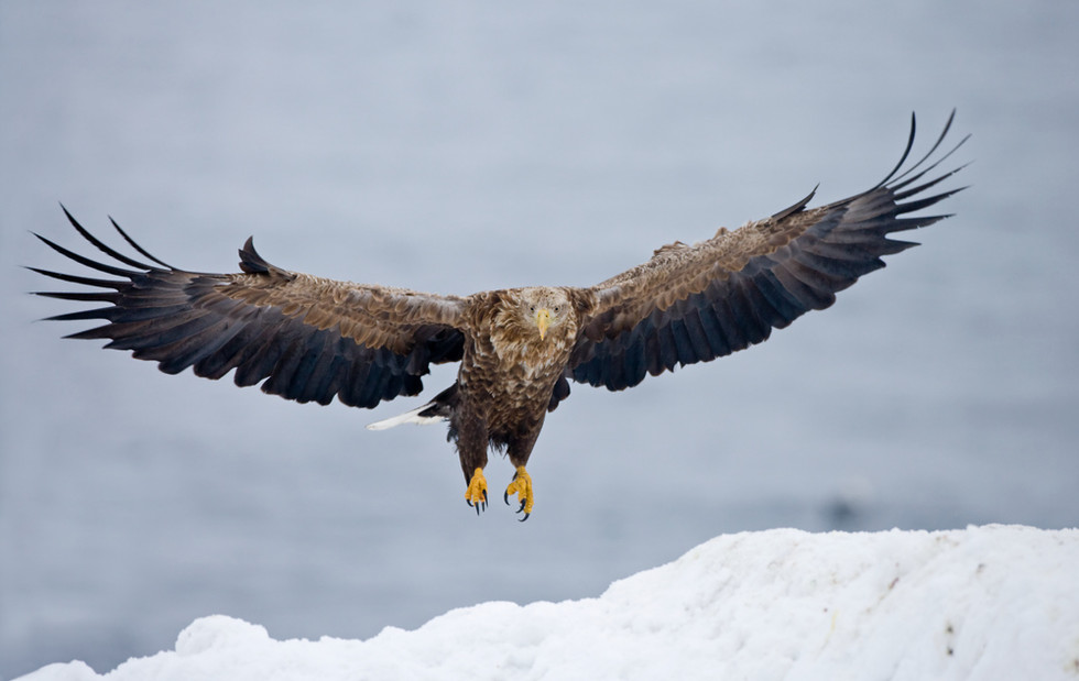_X0A3980 Eagle landing