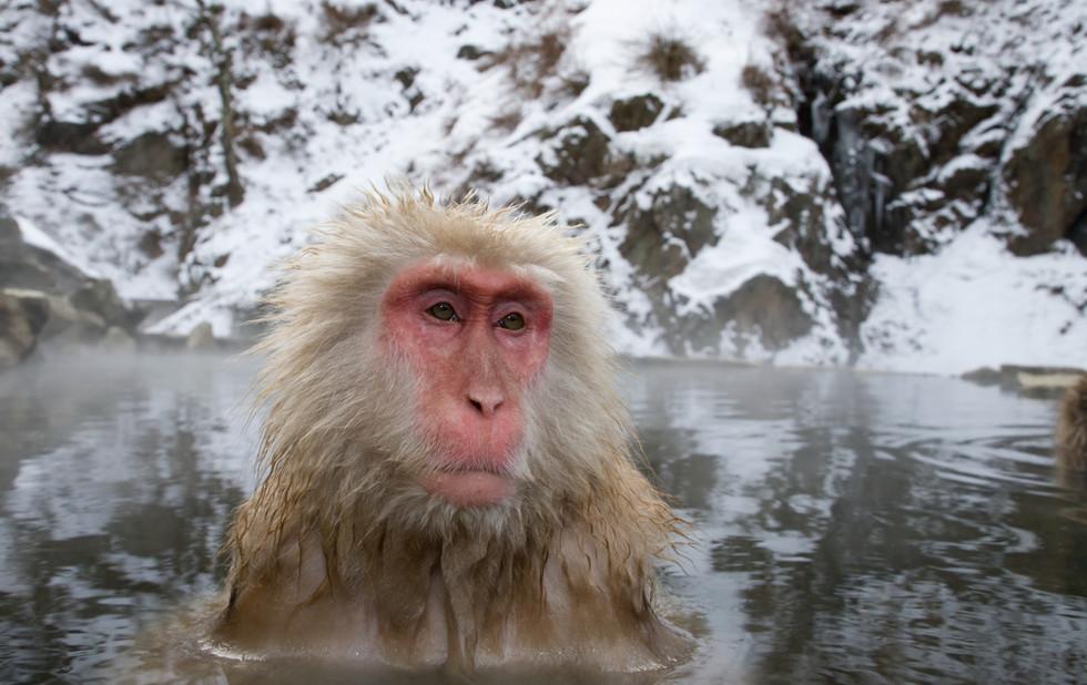 _X0A9685 Monkey in pool