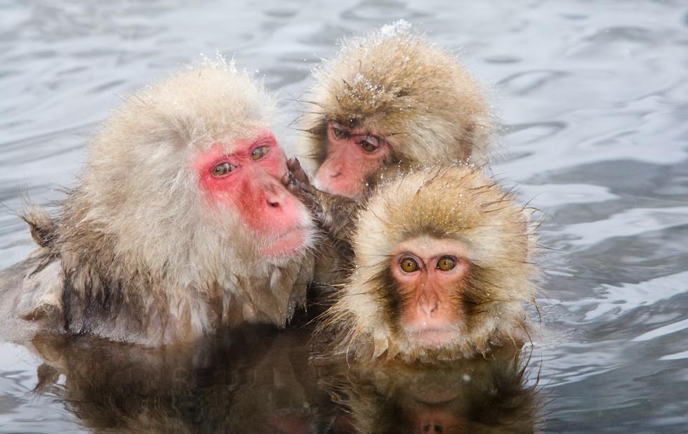 _93C9758 Monkey grooming adult