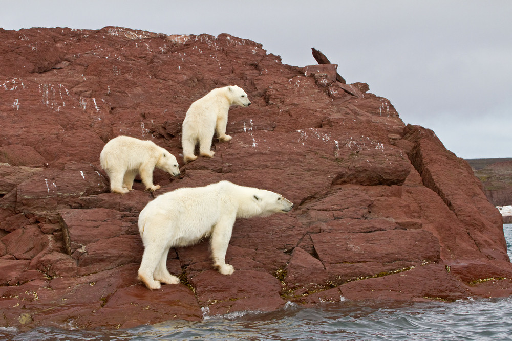 09 Polar Bear.jpg