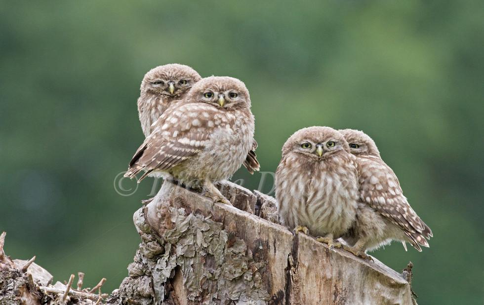 _X0A0454 Four Owls GOOD 2.jpg