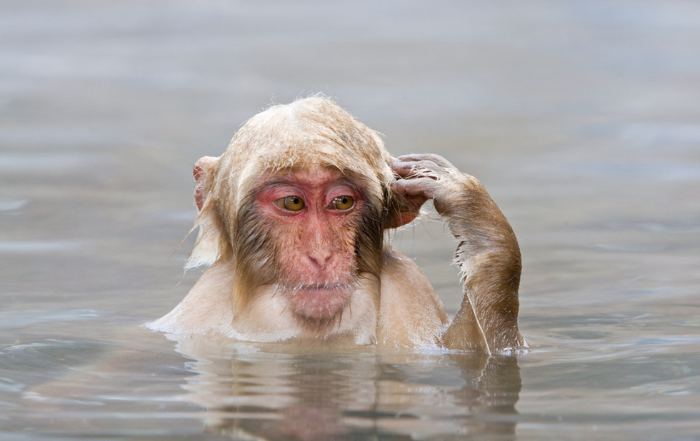 _93C1046 Young Monkey after diving