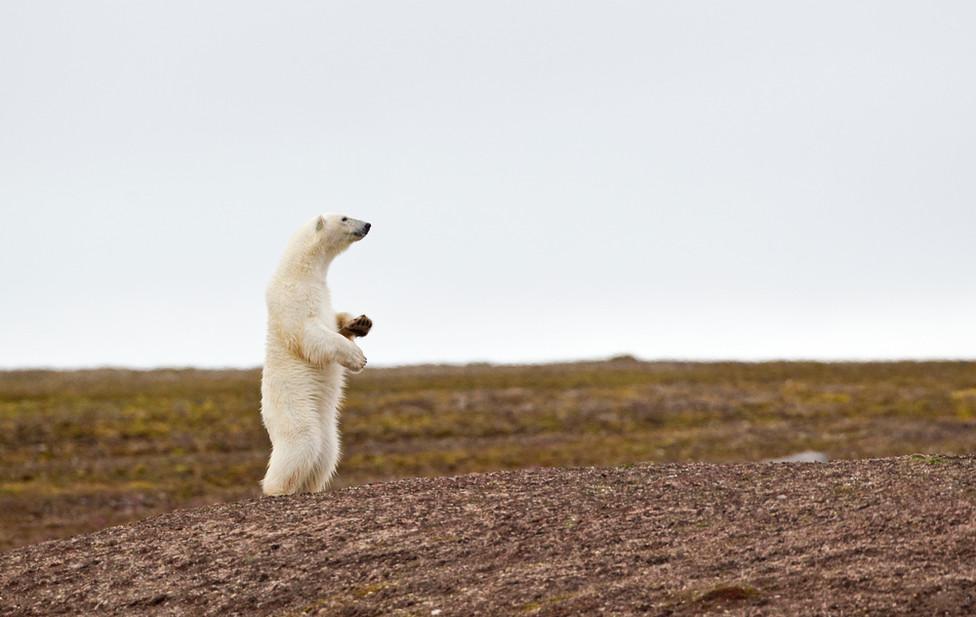 06 Polar Bear.jpg
