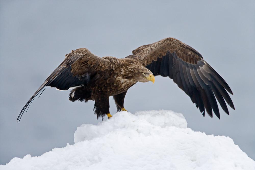 _X0A3808 Eagle touchdown