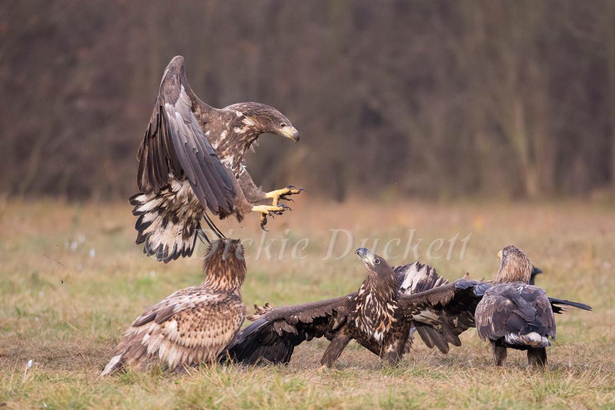 _H2P2732 Eagle group.j