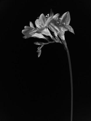 Flower Study by David Davies