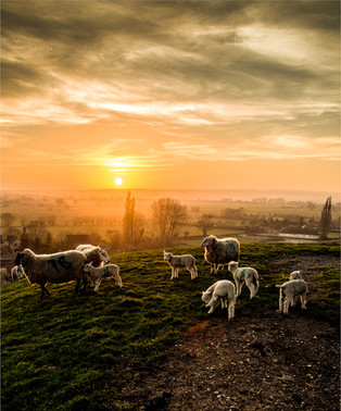 2nd - Sunset in the Field by Derrick Holliday