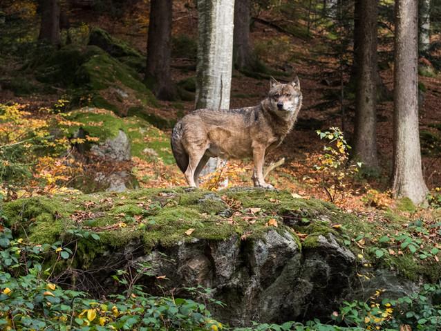 2nd - On the Prowl by Jenny Baker