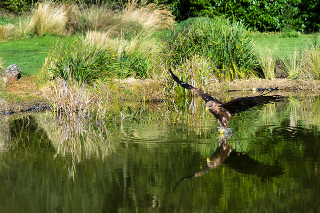 H/c - Skimming the Water by Beate Gregory