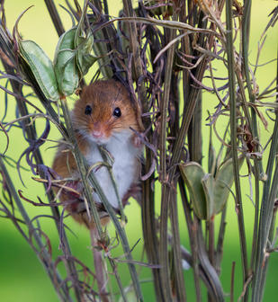 Peeking Out by Carol Hyett