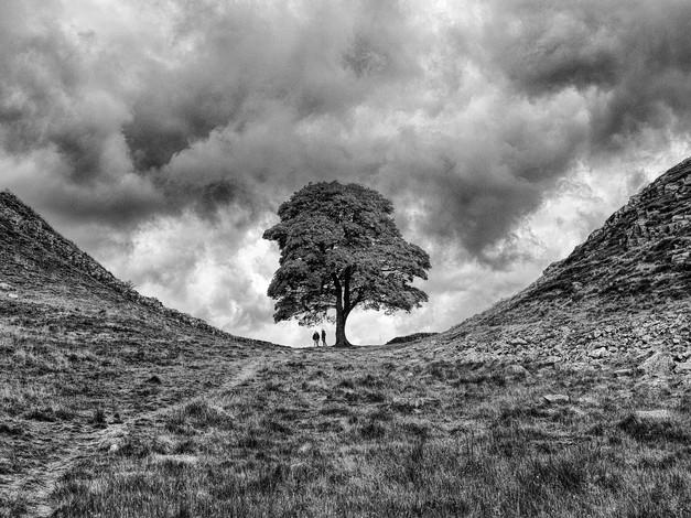 One Two Tree by John Wickett