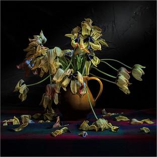 H/C - Tulips - John Wickett ARPS