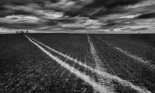 Field Lines by John Perriam