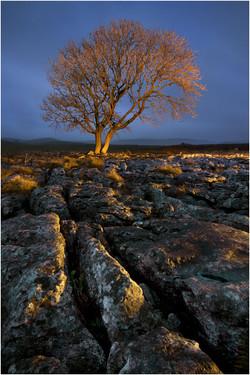 09 Limestone and Tree