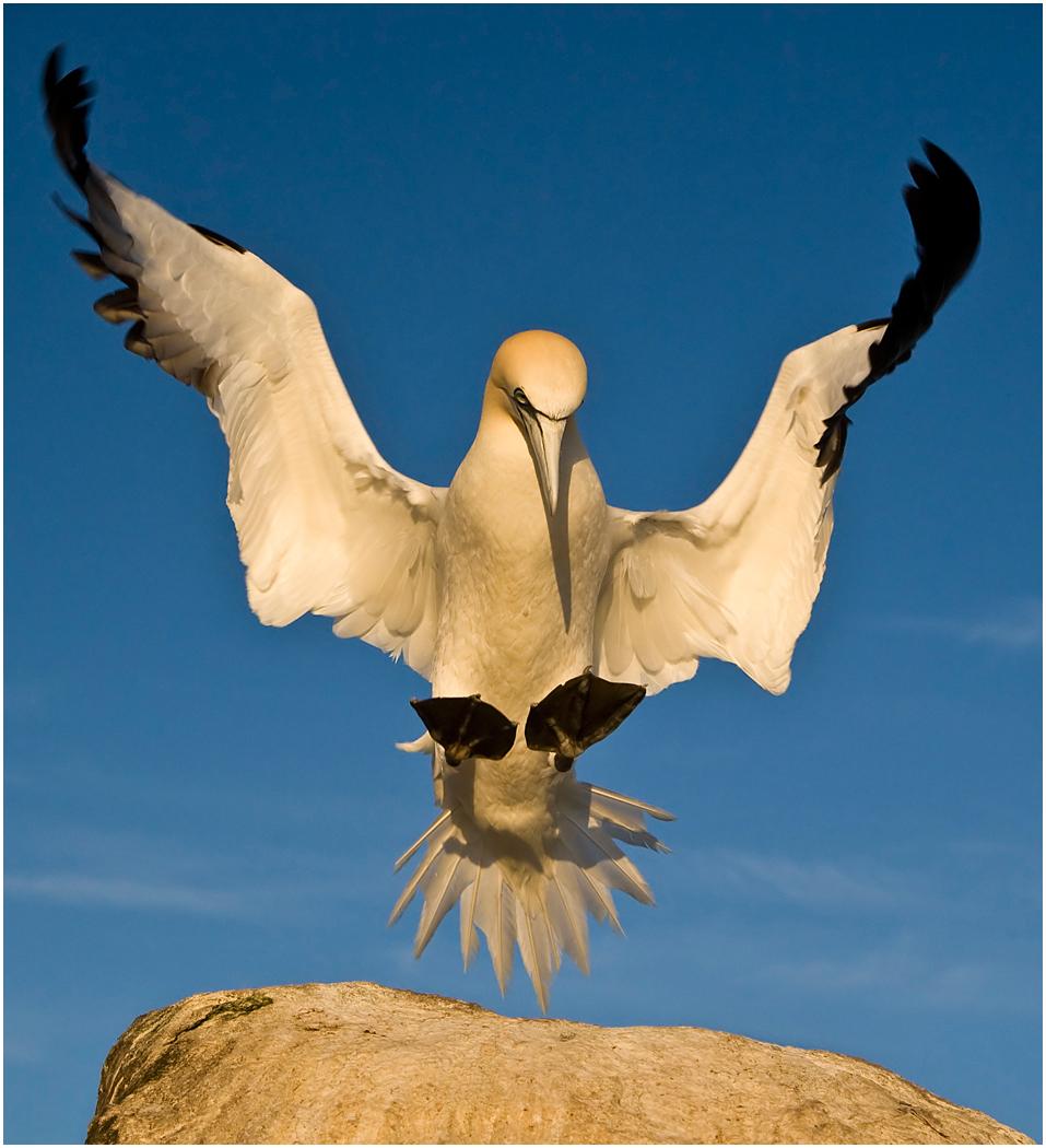 10 Gannet Landing