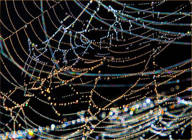 Golden Web by John Wickett