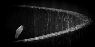Alphington Flood Barrier by Dave Grout