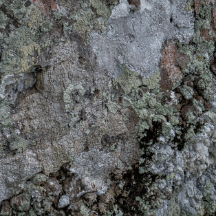 2nd Tree Bark by Stella French