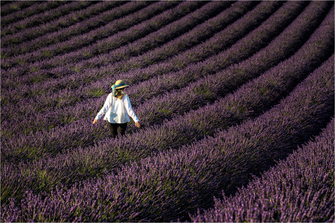 A Walk in the Lavender