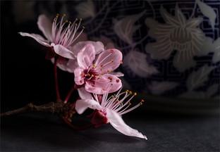 Pink blossom by Elaine Bateman