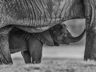 Under Mothers Care by Jenny Baker