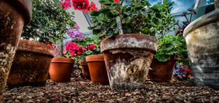 2nd Flower Pots by Christine Chittock