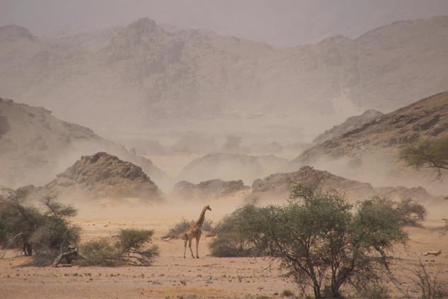 Caught in the Sandstorm