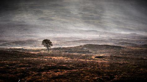 Rain Again by Derrick Holliday.