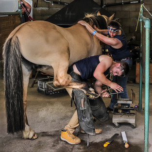 1st Shoeing a Horse by Mike Gillan