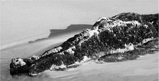 2nd - Crocodile Rock by Peter Hyett