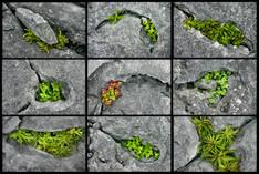Burren Details
