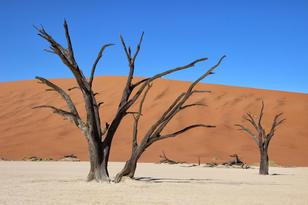 Deadvlei, Namibia by Nova Fisher