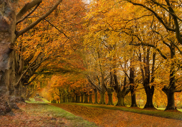 Beech Avenue by Ian Bateman