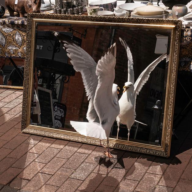 Seagull selfie by Mike Gillan