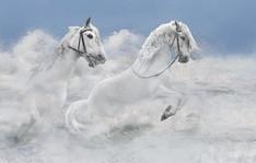 White Horse Enjoyment
