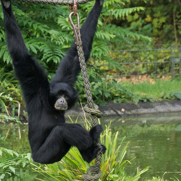 Just Hanging Around by Beate Gregory - 11 points