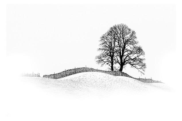 Dales Tree by John Perriam