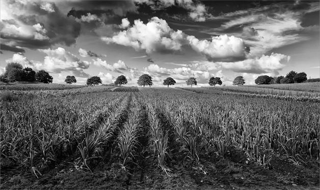 Treeline by Ian Bateman
