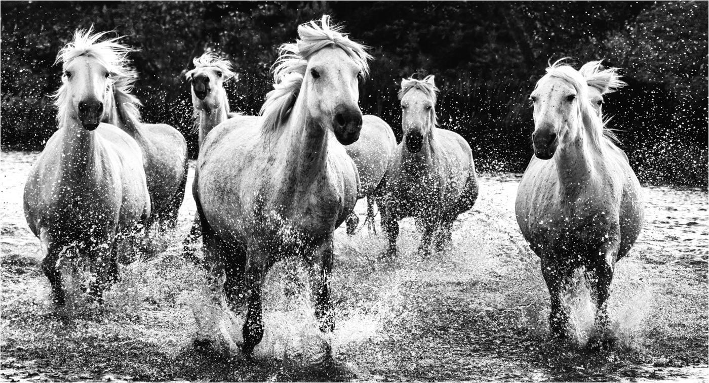 Jenny Baker_Horses on the Run_Jenny Baker