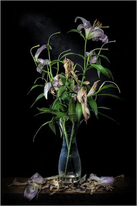 Lilies by John Wickett