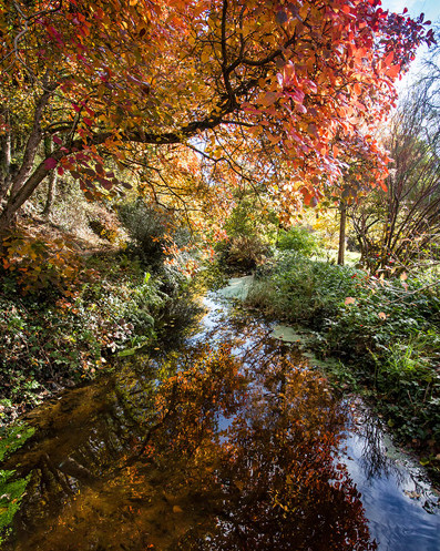 H/c - Autumn Brook by Mike Gillan