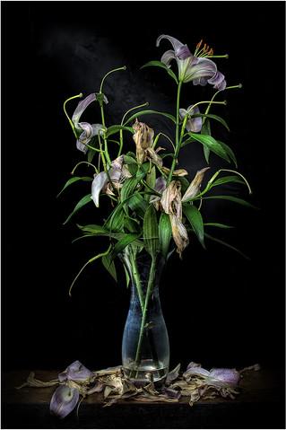 3rd - Lilys by John Wickett