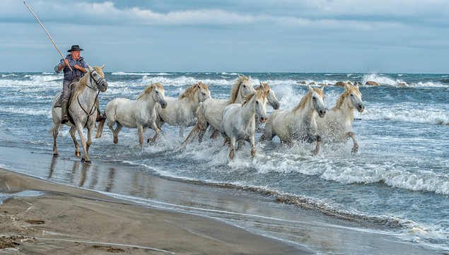 Camargue Wild Horses by Mo Martin - 16 points
