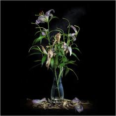 Dead Flowers 10.jpg