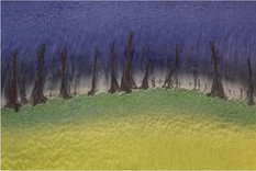 Petrified Forest (Sand Pattern).jpg