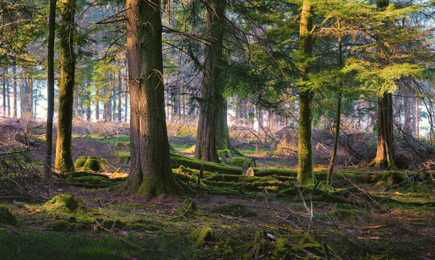 Burrator Evening by Dave Evans