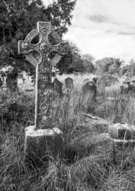 Forgotten Ancestors by Sandra Morton